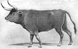 Первісний бик
